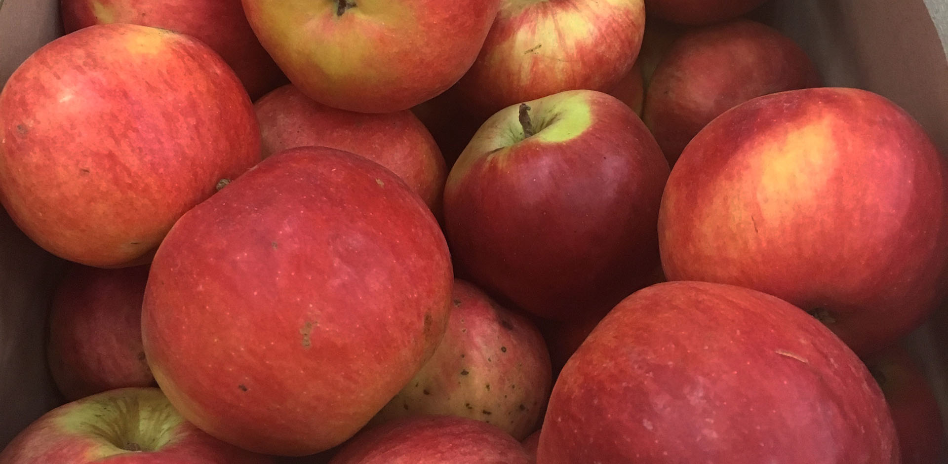 panier des brunettes - pomme home